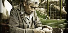 The Longevity Dividend: How Ageing Populations could Boost Economic Productivity